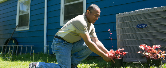 Person planting flowers