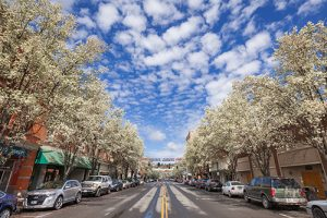 View of main street in Pendleton, Oregon with trees in bloom and puffy clouds in sky.