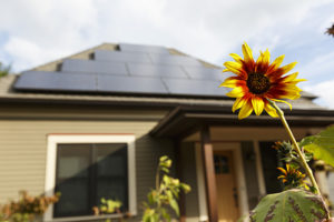 View of a home with solar panels on the roof with a sunflower in the foreground.